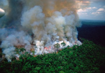 "The Amazonian forest fires: how you can help save ""the lungs of our world"""