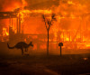 The Australian bushfires and ways to unite in times of the  nationwide natural disaster