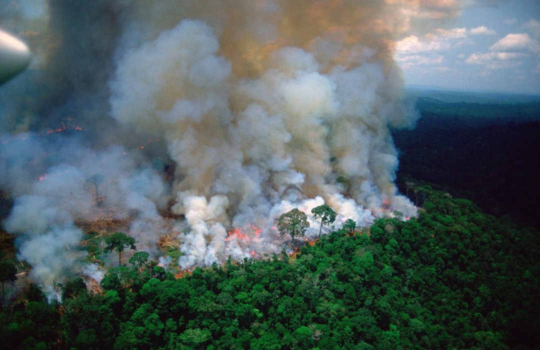 """The Amazonian forest fires: how you can help save """"the lungs of our world"""""""